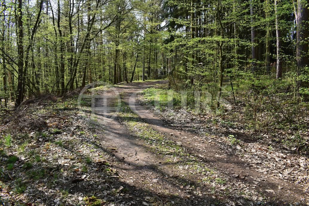 Prodej lesního pozemku 2512m², Praha západ, Masečín - Hvozdy